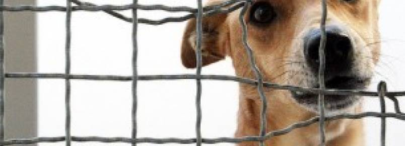 Gaia dá descontos veterinários a quem tem animais adotados