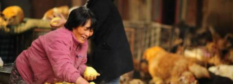 Mulher viaja mais de 2.5 mil quilômetros para salvar cães do festival de Yulin