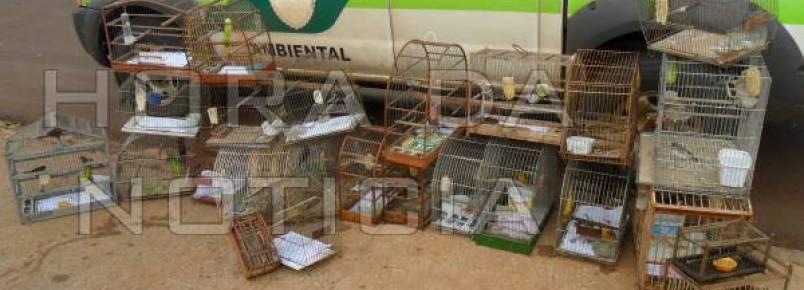 Policia Ambiental solta 26 pássaros silvestres mantidos em cativeiro
