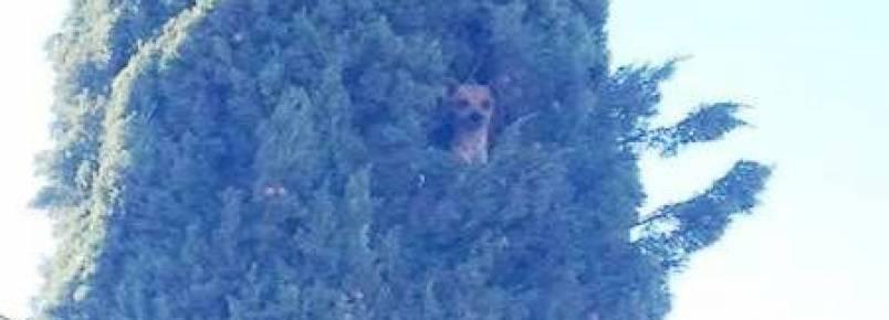 Cachorra sobe em árvore e fica presa a mais de 7 metros de altura