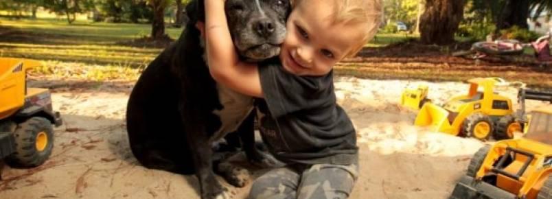 Pit Bull salva criança de morte certa em incrível história