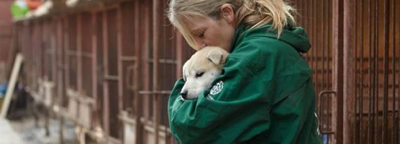 Cães que iriam virar comida são resgatados na Coréia do Sul