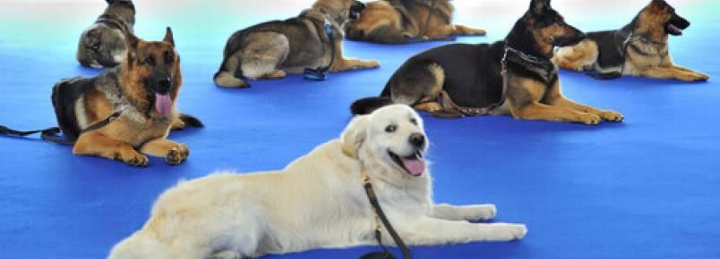Animais de estimação como terapia para presidiários