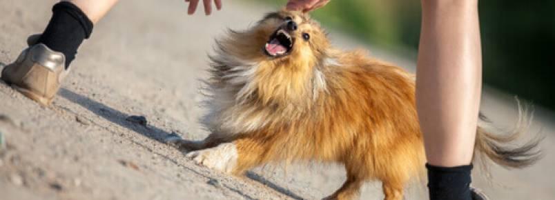 O que fazer se um cão te atacar?
