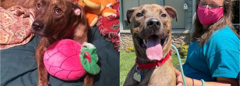 Cachorro recebe comemoração ao ser adotado após passar 260 dias em abrigo; vídeo