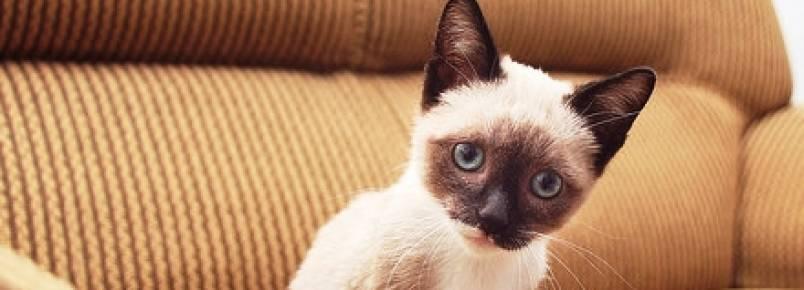 Gatos: mau hálito pode indicar problemas de saúde mais graves