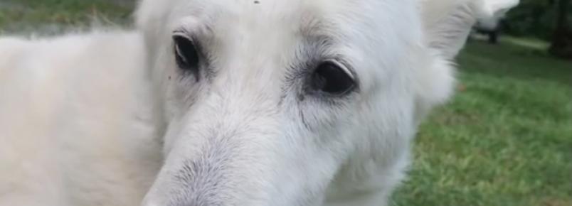Cachorra adota filhote de gambá órfão