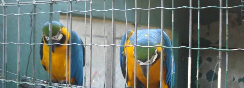 Aves com suspeitas de maus-tratos e são apreendidas em Guarapari