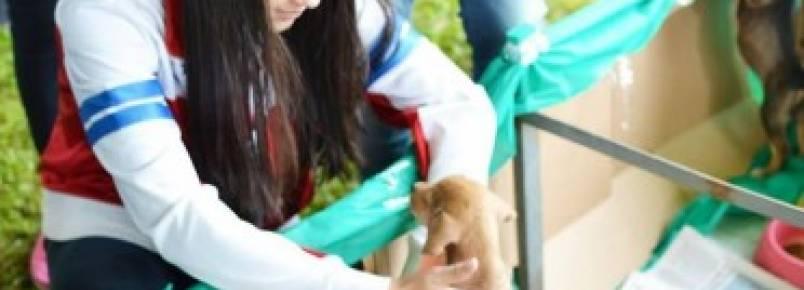 Associações promovem eventos em proteção aos animais