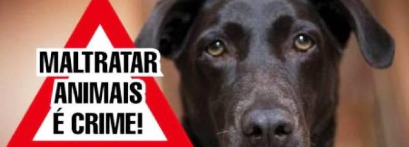 Protetores de animais denunciam maus-tratos contra cães em Belo Horizonte
