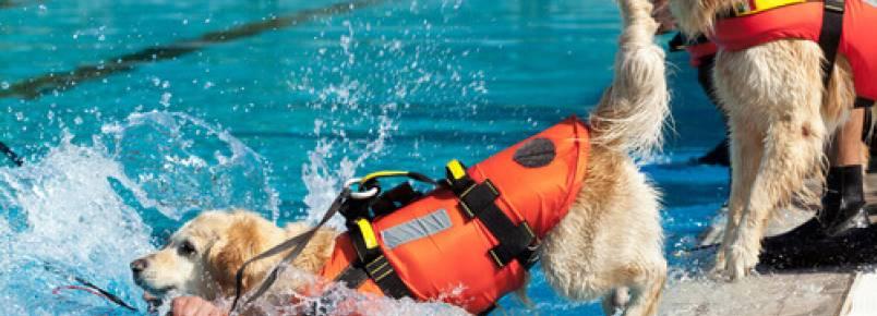 Cães de resgate aquático, a última novidade