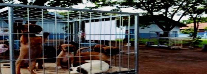 Prefeito quer instalar UPA para cães e gatos em 2020