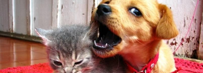 Enchentes podem trazer doenças e consequências fatais para cães e gatos