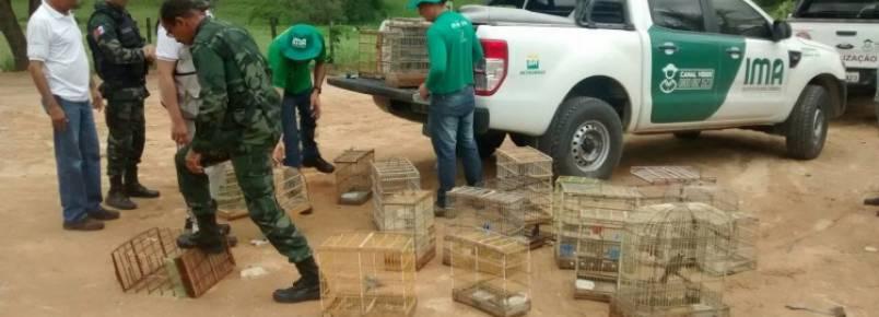 Fiscais do IMA devolvem à natureza pássaros apreendidos em Mata Grande