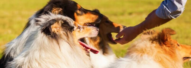 Intolerância a certos alimentos nos cães