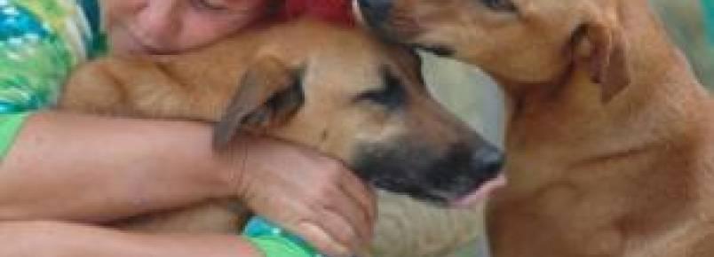 Mulher usa todas as economias para cuidar de mais de 200 cães abandonados