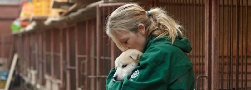ONG resgata 57 cães que seriam vendidos como comida na Coreia do Sul