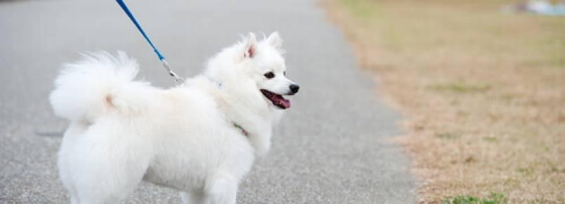Passear com o cachorro nos deixa em forma