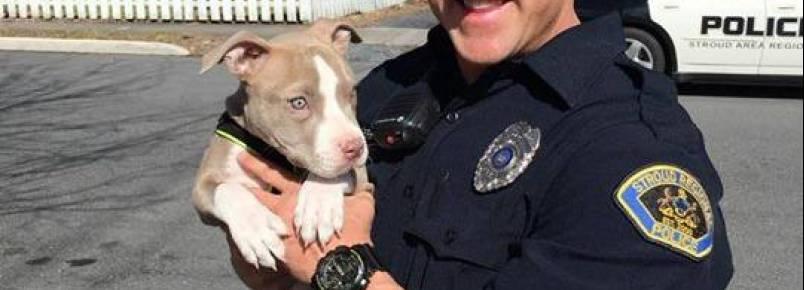 Policial entra em casa em chamas para salvar filhote de pit bull