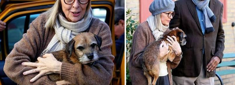 Morgan Freeman e Diane Keaton têm a companhia de uma cachorra em novo filme