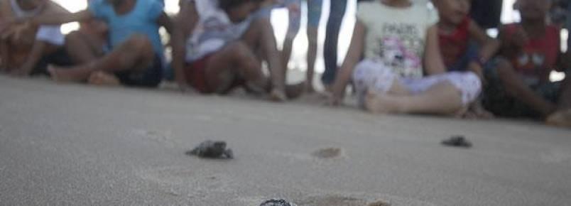 Dia da Tartaruga reflete sobre a extinção de espécies