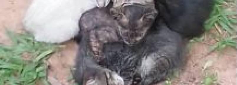 Cuiabá tem 11 mil animais nas ruas e nenhuma política pública