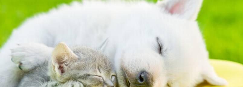 10 curiosidades sobre o sono dos animais