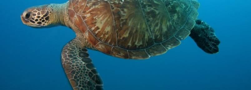 Atitudes simples podem salvar animais marinhos