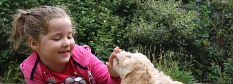 Avança em SP projeto que permite animais de estimação nas escolas