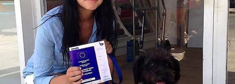 Mulher viaja milhares de quilômetros para adotar cachorra que salvou sua vida