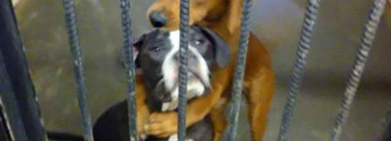 Abraço salva cadelas de corredor da morte