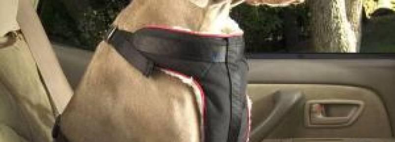 Como transportar seu cachorro no carro de maneira segura