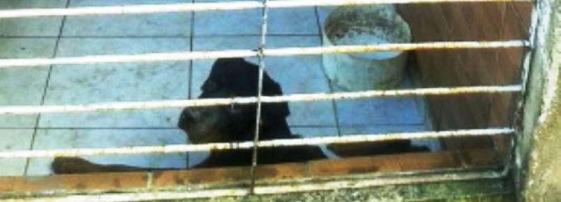 Moradores denunciam abandono de cães idosos e doentes em Paulista