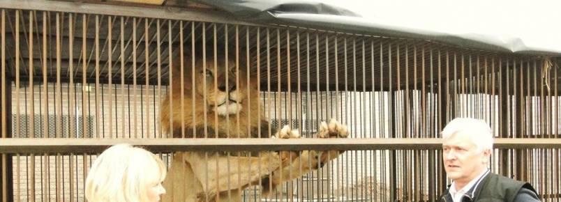 Animais explorados por circos estão sendo libertados no Peru