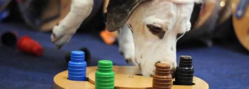 Conheça novos brinquedos que estimulam a inteligência dos cães