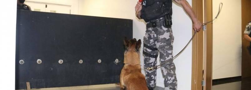 Polícia treina cães de faro para encontrar novas drogas em circulação