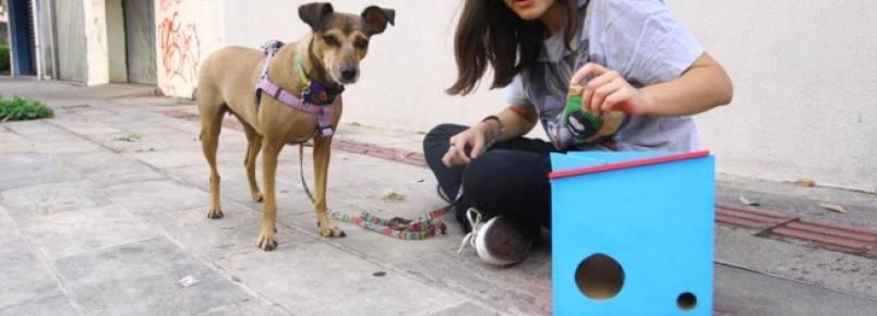 Brinquedo feito por aluna da UFMG ajuda a mudar hábitos de animais