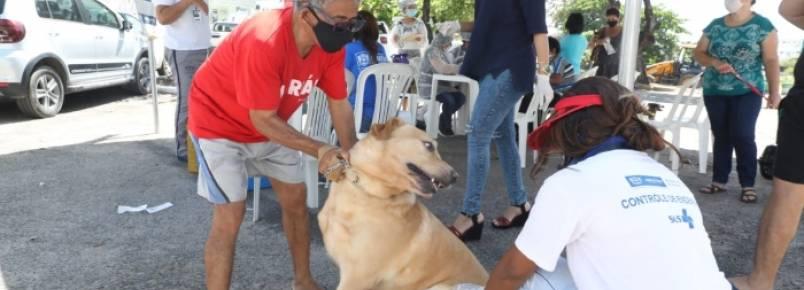 Cães e gatos são vacinados gratuitamente via drive thru em Jaboatão