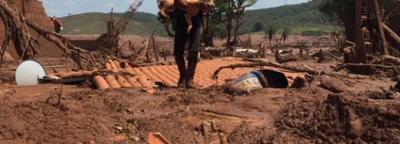 Samarco terá 45 dias para resgatar animais atingidos por lama