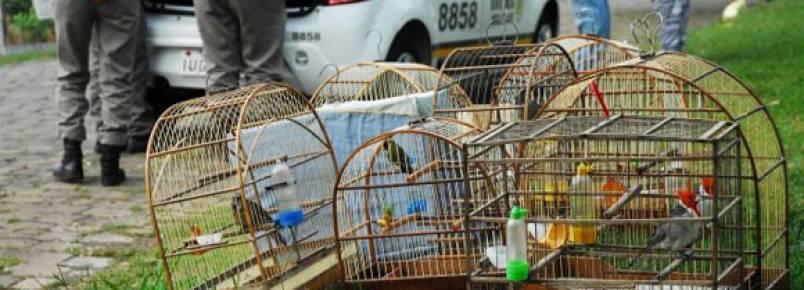 Operação da BM e MP apreende aves silvestres em Venâncio Aires (RS)