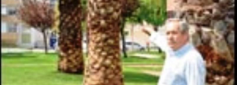 Polícia impede destruição de ninhos de aves em palmeiras de Alverca