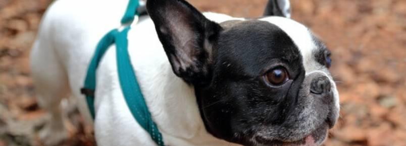 Como saber se o meu animal de estimação está enxergando mal?