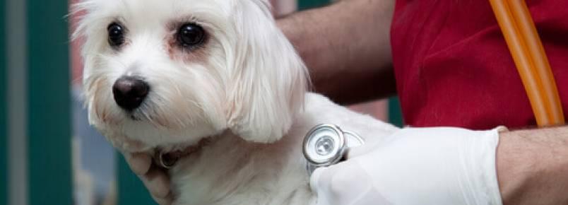 Existem seguros de saúde para cães?