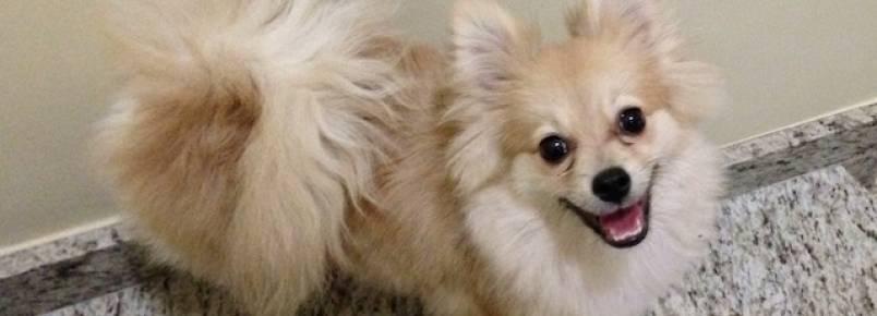 5 raças de cachorro que parecem nunca cansar de brincar