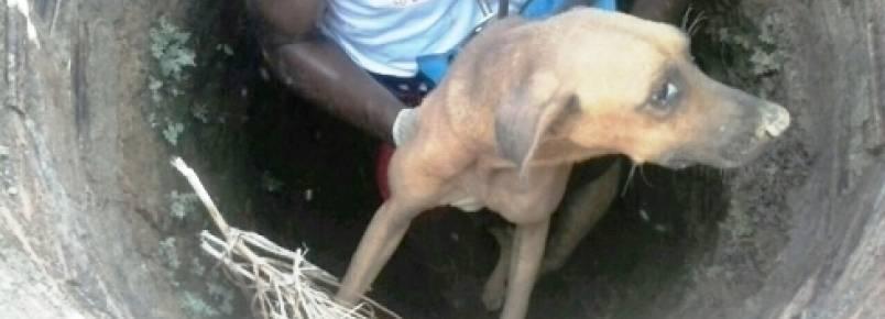 Corpo de Bombeiros e PM resgatam cachorro caído em poço a vários dias