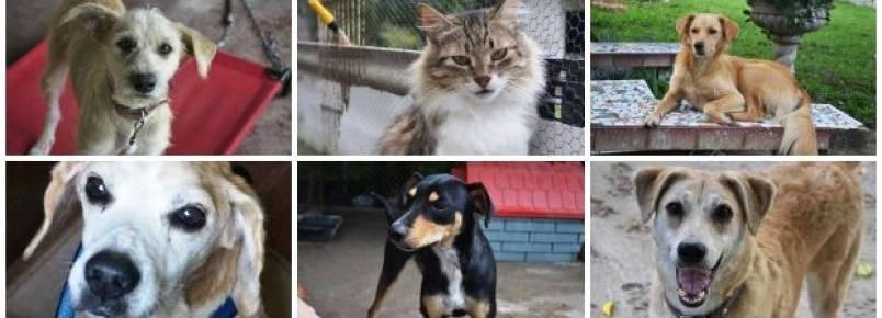 Um paraíso para animais carentes: ONG resgata cães e gatos de rua
