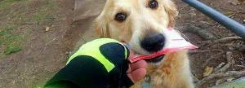 Carteiro escreve cartas para cão que ama receber a correspondência da família