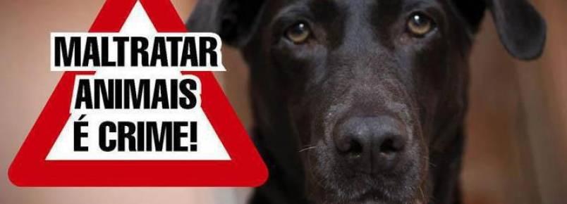 Moradores reclamam de lar para animais abandonados