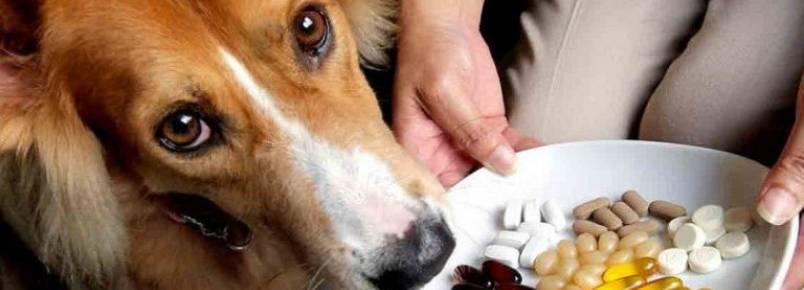 Saiba mais sobre suplementos para cães