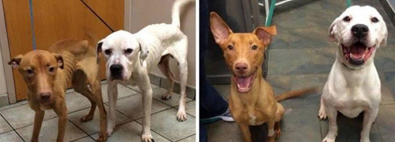 Abandonados, cachorros são encontrados na rua em estado lamentável